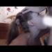 海外ハメ撮り 兄のチンコを咥えまくってイラマチオする女の子 by hamedoriking